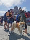 dog-friendly-64295