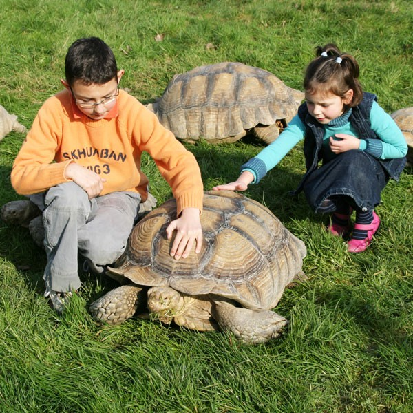 enfant-tortue-carre-2-2202