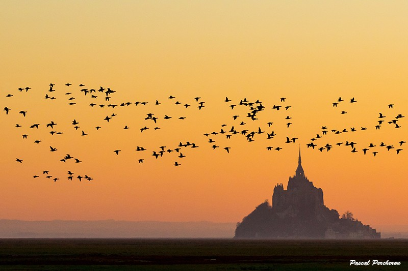 photo-mont-saint-michel-bernaches-10251